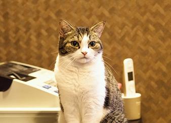 レジ前に経つ猫